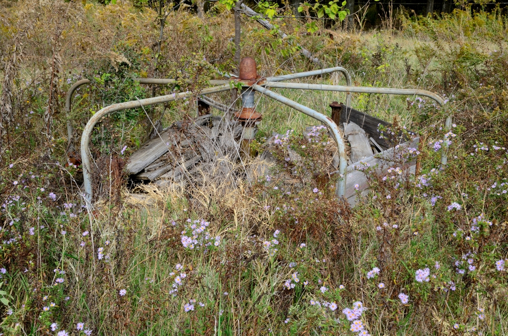 The old merry-go-round sits in a field of late summer wildflowers.